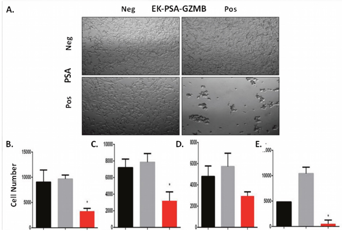 EK-PSA-TRP inhibits prostate cell growth selectively in the presence of PSA.