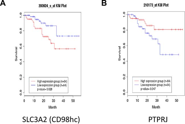 Non-small Cell Lung Cancer (NSCLC) patients with poor outcome show enhanced SLC3A2 and decreased PTPRJ expression levels.