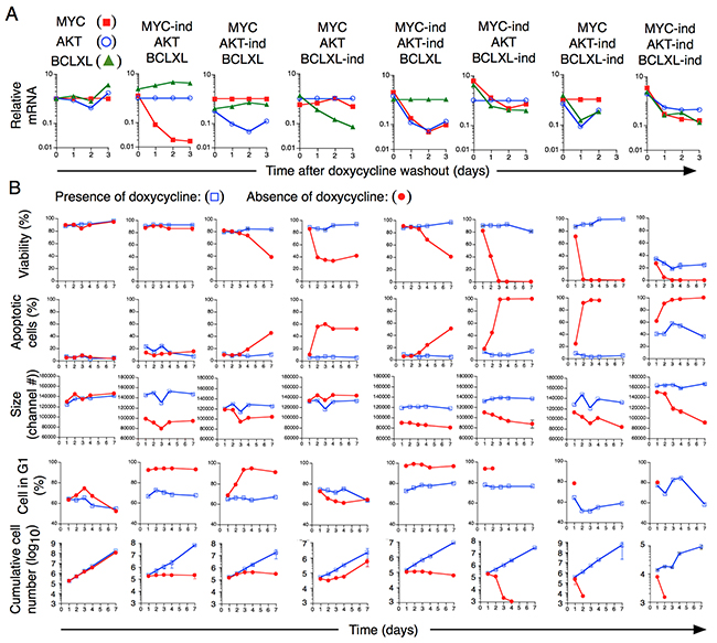 Dependence of expression on MYC, AKT and BCLXL for sustained growth of transformed T cells in vitro.
