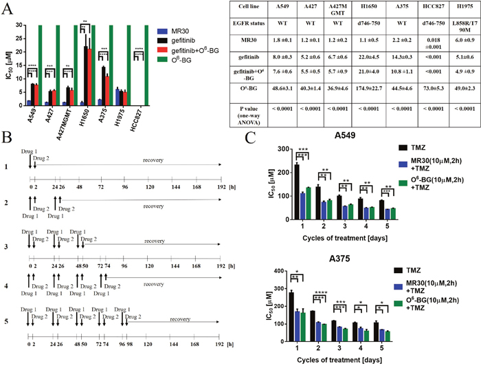 Effects of the dual targeting properties of MR30 on growth inhibition and sensitization of resistant cells to TMZ.