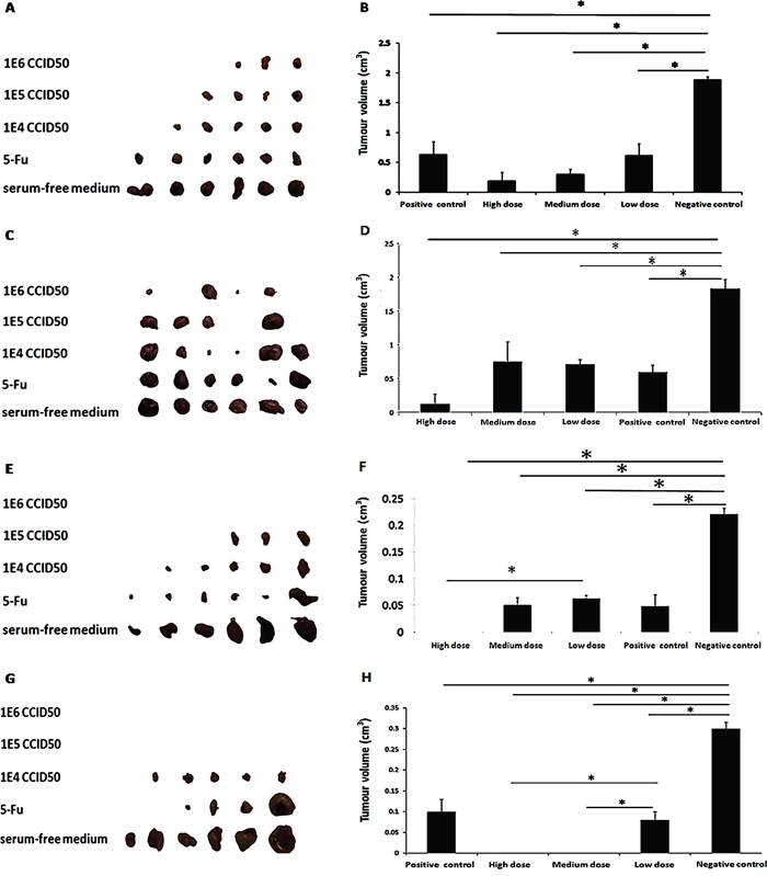 Oncolytic ability of OH2 in vivo.