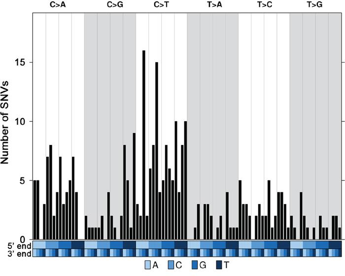 Trinucleotide mutational profile of current luminal samples.