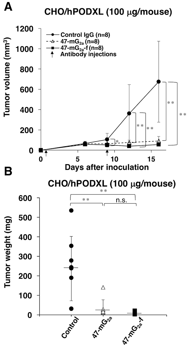 Antitumor activity of 47-mG2a and 47-mG2a-f against CHO/hPODXL.