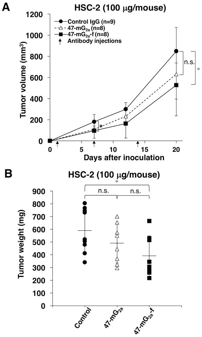 Antitumor activity of 47-mG2a and 47-mG2a-f against HSC-2 xenografts.