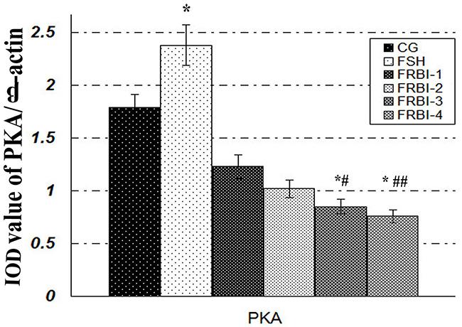 Effect of FRBI on protein kinase A (PKA).