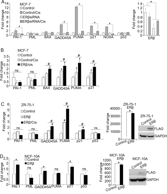 ERβ alters p53-dependent transcription in response to chemotherapy.