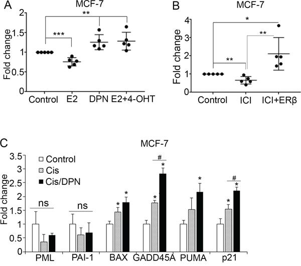 ER ligands modulate p53 function.