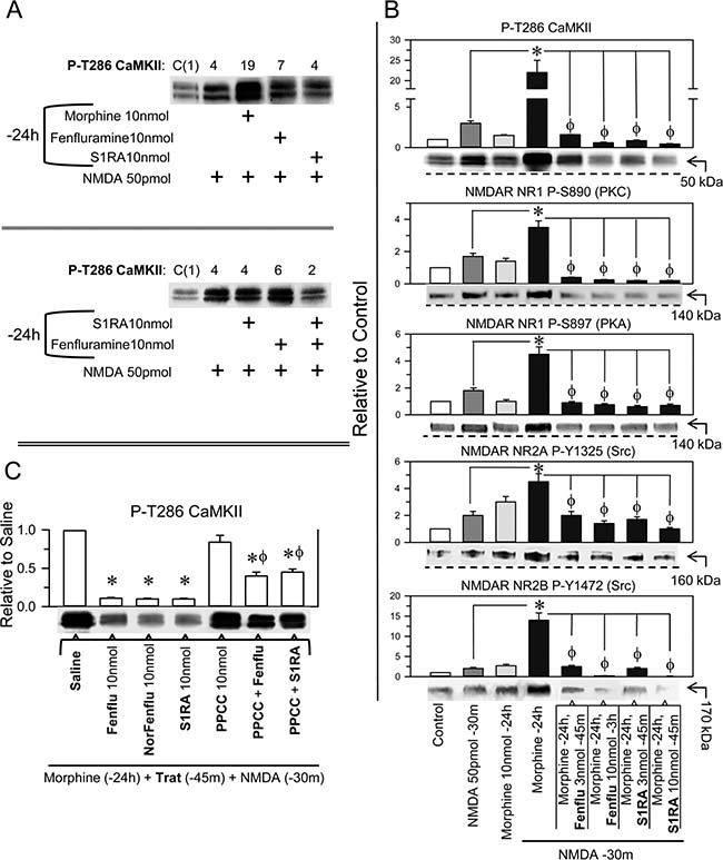 Effect of fenfluramine and S1RA on the overactivity of NMDARs promoted by NMDA in morphine-primed mice.