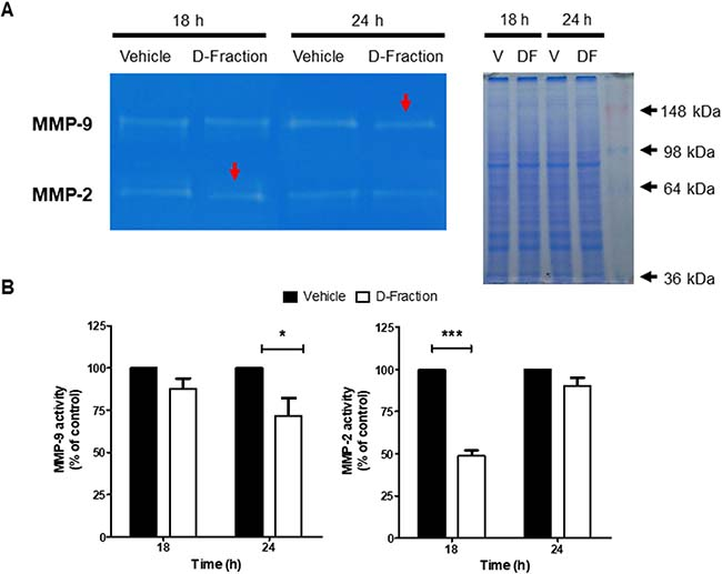 Maitake D-Fraction decreases the activity of MMP-2 and MMP-9 secreted by TNBC MDA-MB-231 cells.