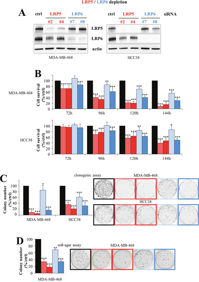 LRP5 and LRP6 are essential for the survival of breast cancer cells.