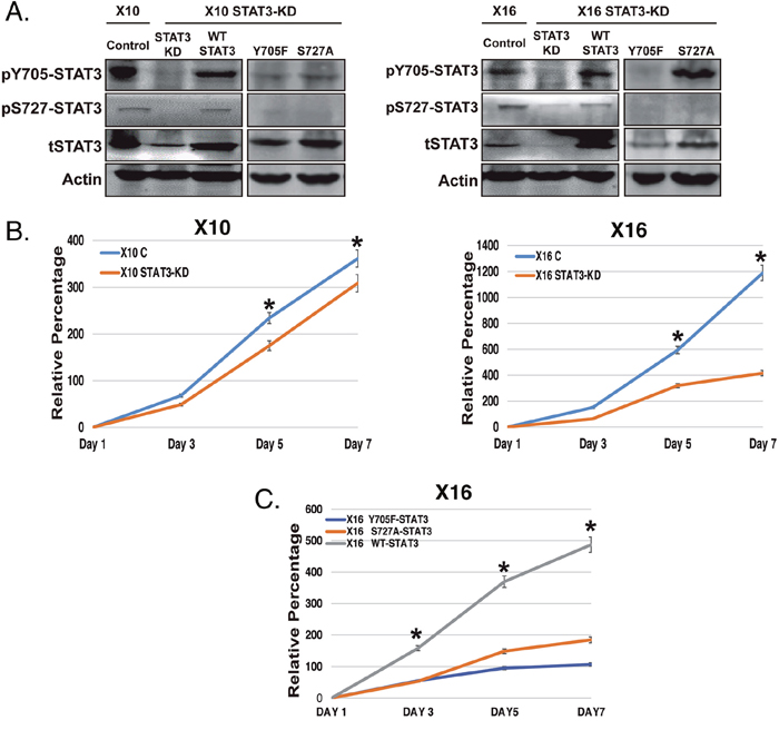 The effect of STAT3-KD and expression of STAT3 phosphorylation-defective mutants on STAT3 phosphorylation and GIC proliferation.