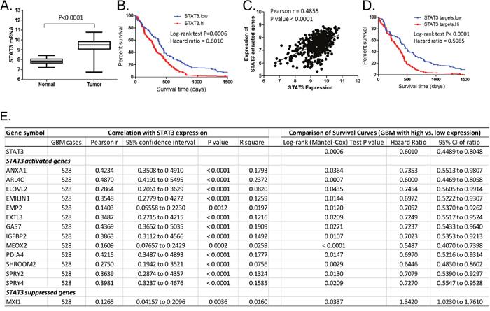 Identification of downstream effectors of STAT3 in GBM tumor specimens.