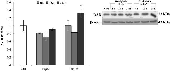 BAX protein expression levels.