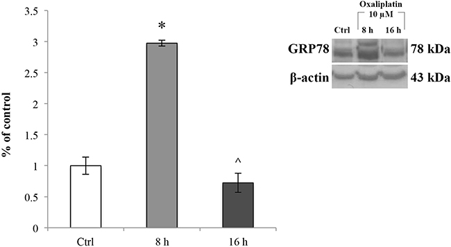 GRP78 expression levels in RBE4 cells treated with oxaliplatin.