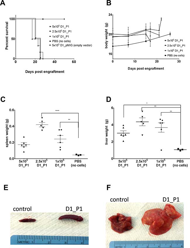 D1_hIL7RP1 cells engrafted into Rag1−/− result in rapid morbidity, splenomegaly, and hepatomegaly.