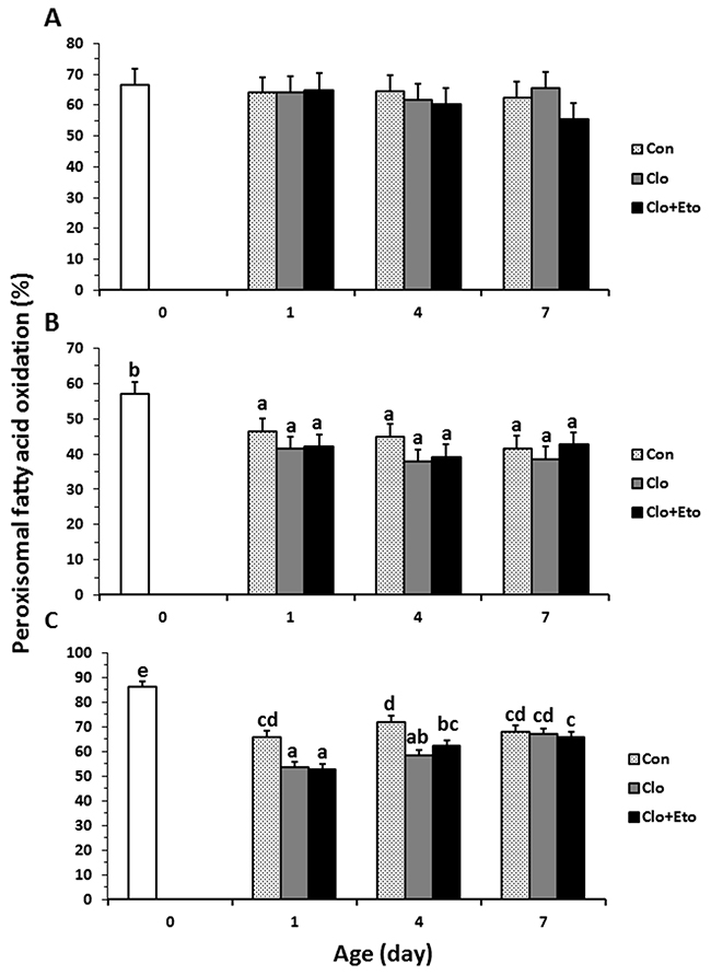 The contributions of peroxisomal β-oxidation to total fatty acid β-oxidation in liver from pigs received vehicle (Con), clofibrate (Clo) or clofibrate + etomoxir (Clo+Eto).