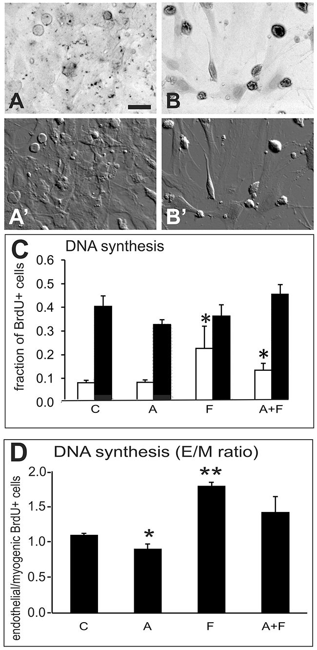 DNA synthesis experiment.