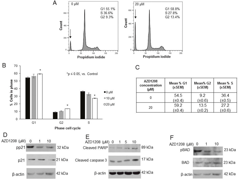 AZD1208 prevented progression through the cell cycle and led to apoptosis in HuH6 hepatoblastoma cells.