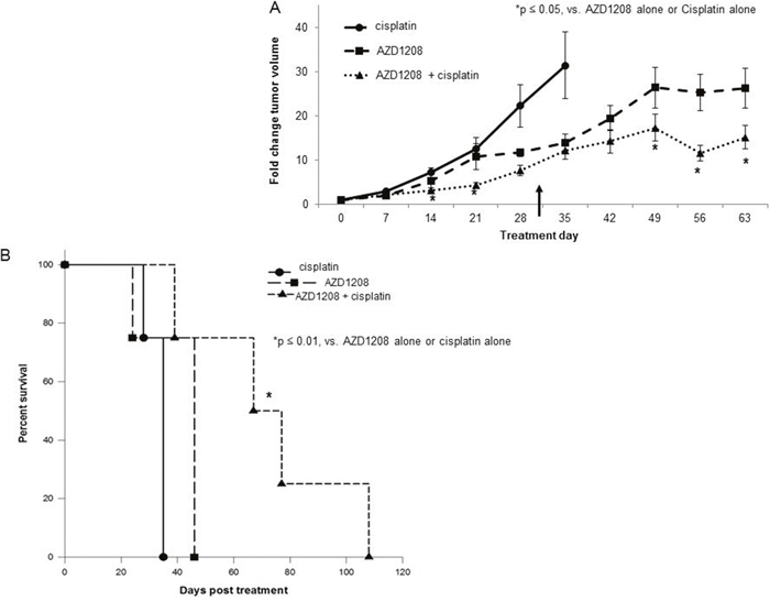 PIM inhibition in combination with cisplatin decreased tumor growth and increased survival in a xenograft model of hepatoblastoma.