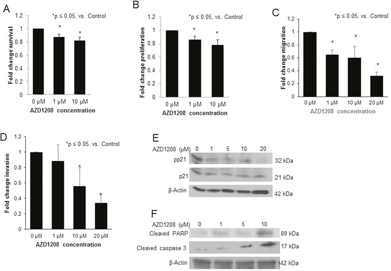 PIM kinase inhibition with AZD1208 decreased survival, proliferation, migration, and invasion, affected phosphorylation of p21, and induced apoptosis in the hepatoblastoma PDX, COA67.
