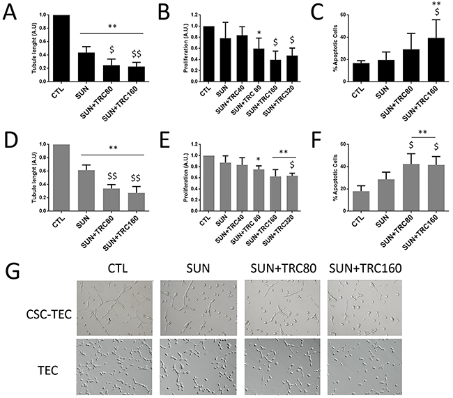 TRC105 in combination with Sunitinib inhibits tube formation, proliferation and survival of CSC-TEC and TEC.