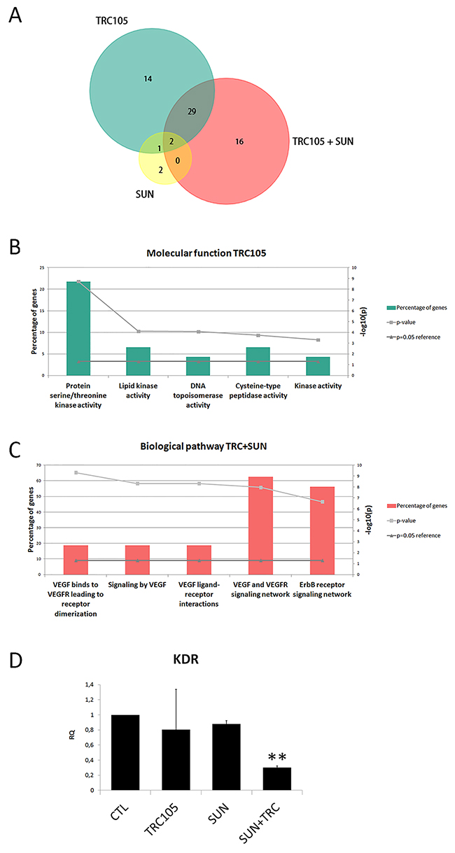 Molecular analysis of CSC-TEC treated with TRC105 and Sunitinib alone or in combination.