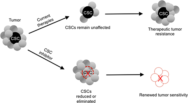 Potential paradigm-shifting effect of a cancer stem cell (CSC) inhibitor on tumor chemoresistance.