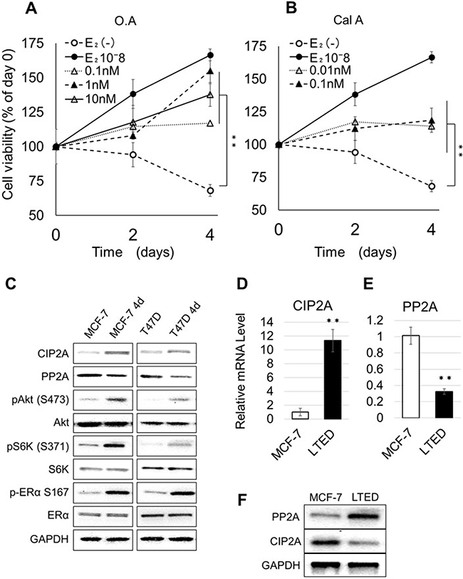 Effect of PP2A inhibition on the proliferation of E2-depleted cells.