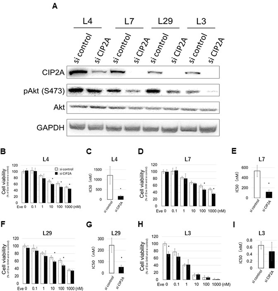 Effect of CIP2A gene knockdown on EVE sensitivity.