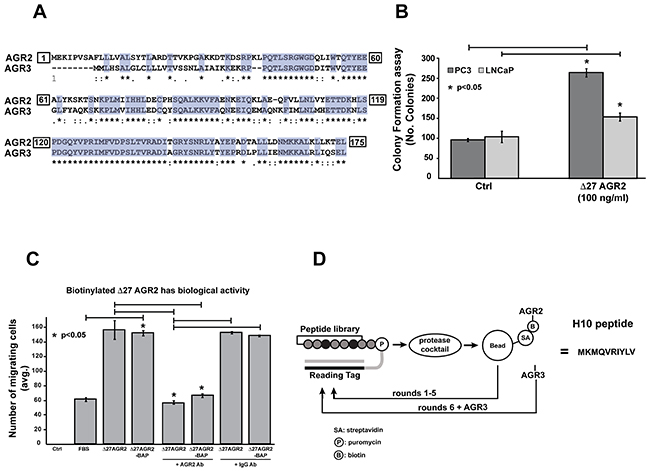 Characterization of recombinant protein activity and selection of AGR2 binding peptides by mRNA display.