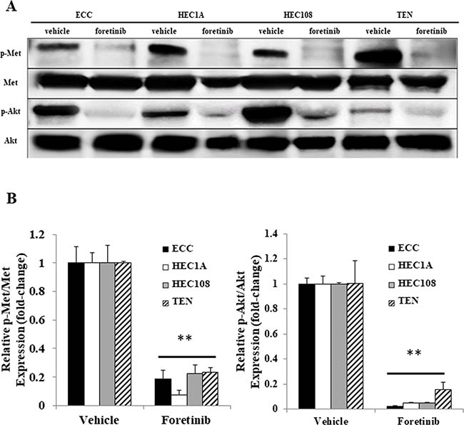 The Met and Akt phosphorylation in the endometrial cancer cell lines.