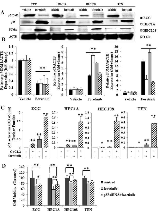 Foretinib induced p53-related apoptosis in endometrial cancer cell lines.