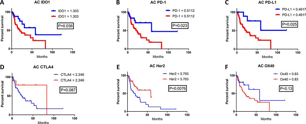 The correlation of patient survival with immune checkpoint expression mRNA levels in esophageal adenocarcinoma.
