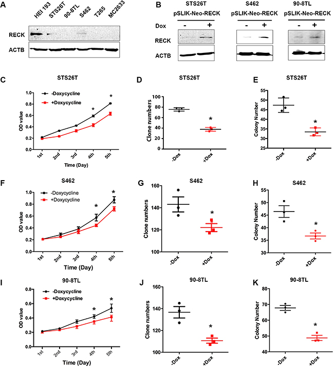 Restoration of RECK in human MPNST cells suppresses cell growth.