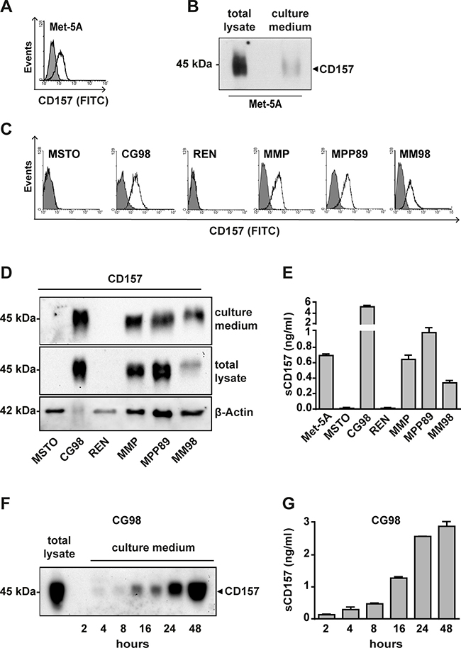Analysis of CD157 expression and release in malignant and non-malignant mesothelial cell lines.