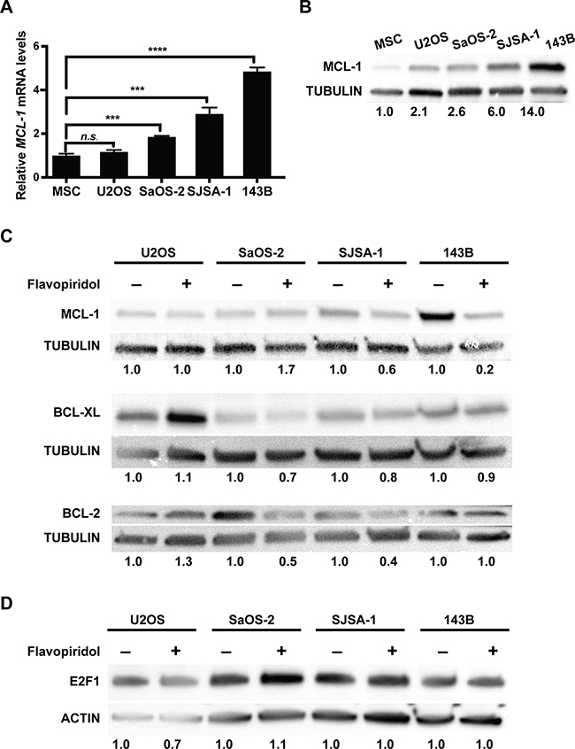 Flavopiridol alters the expression of BCL-2 family members in osteosarcoma.