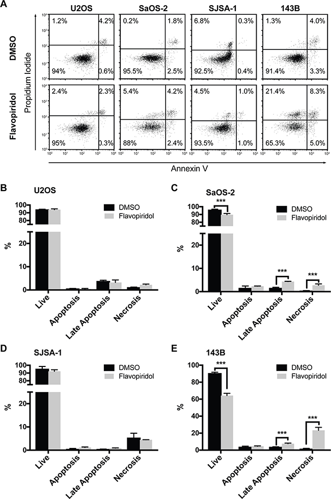 Increased necrosis after flavopiridol treatment in p53-null osteosarcomas.
