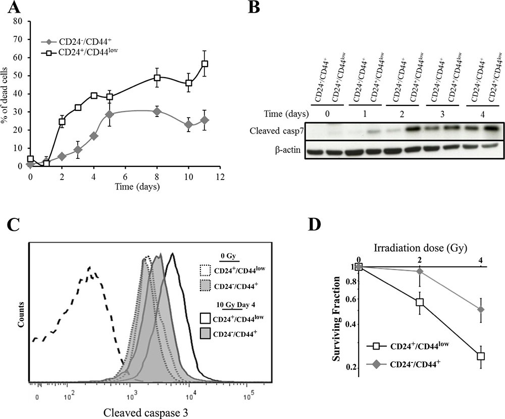 Analysis of cell death of CD24+/CD44low cells and CD24−/low/CD44+ cells after 10 Gy irradiation.