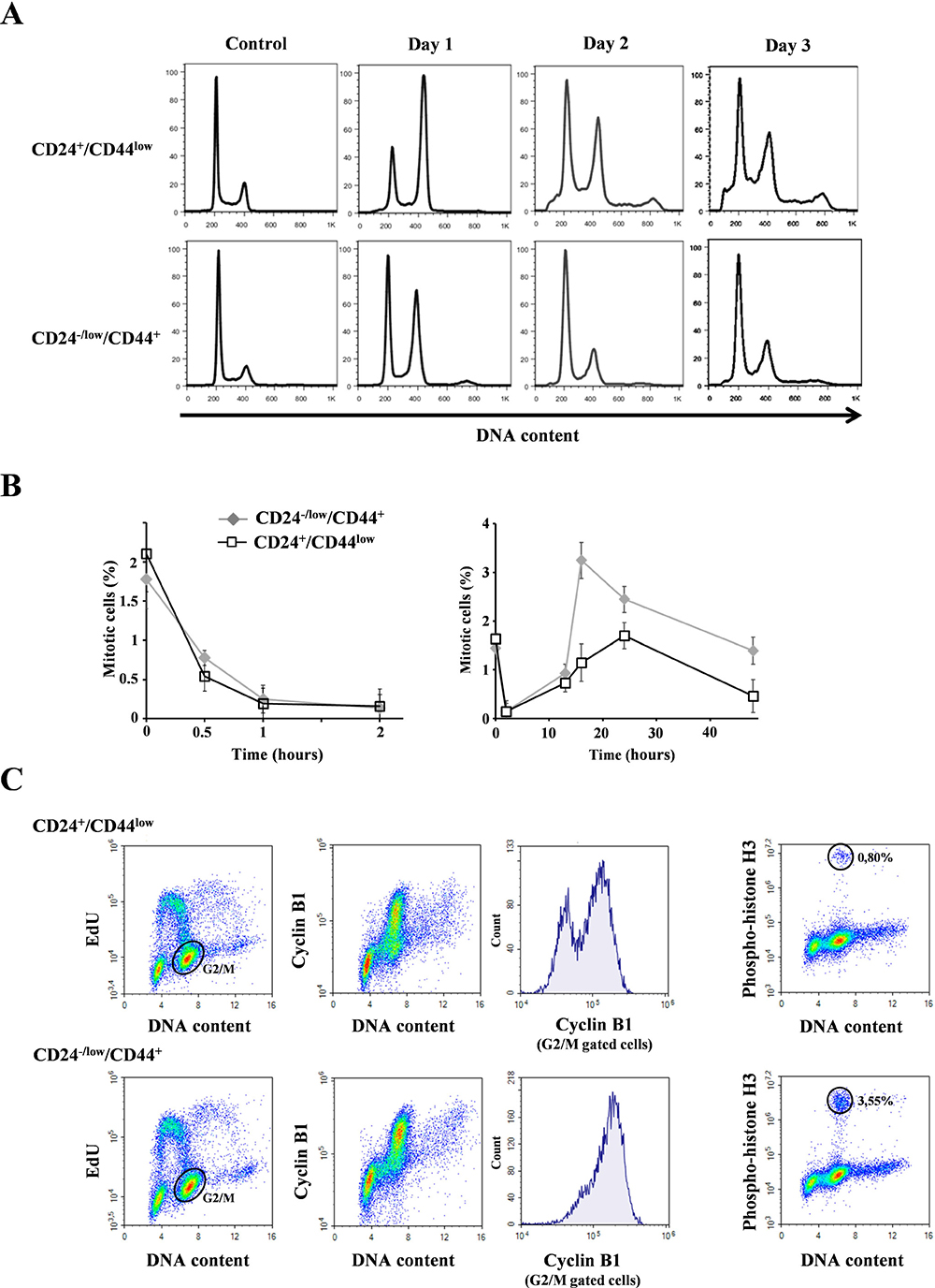 Analysis of cell cycle distribution in CD24+/CD44low cells and CD24−/low/CD44+ cells after 10 Gy irradiation.