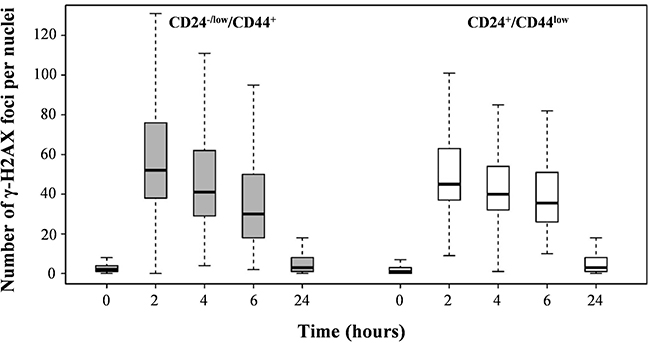 Analysis of global DSB repair in CD24+/CD44low cells and CD24−/low/CD44+ cells after 4 Gy irradiation.