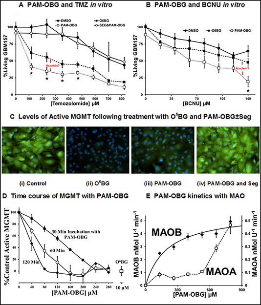 PAM-OBG is a MAOB sensitive prodrug.
