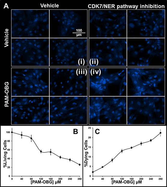 PAM-OBG derived acrolein is toxic in SNS-032 treated cells.