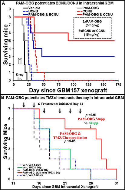 PAM-OBG potentiates the treatment of intracranial GBM tumors in mice.