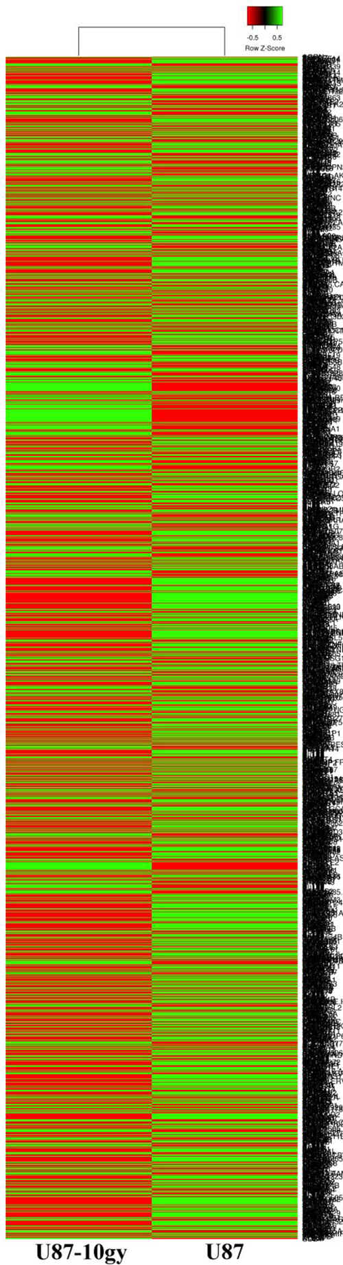 Clustered heat map of RNA-seq transcriptomes of U87 and U87-10gy cells.