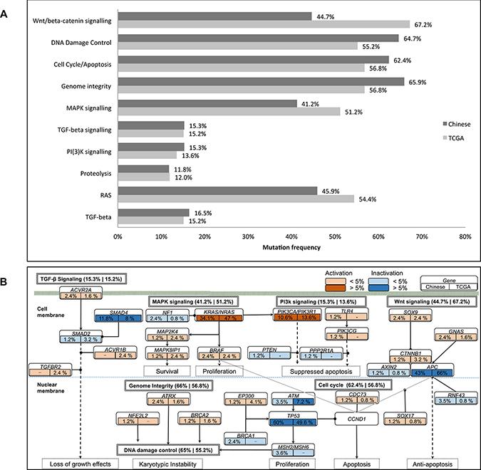Illustration of mutated genes in pathways.