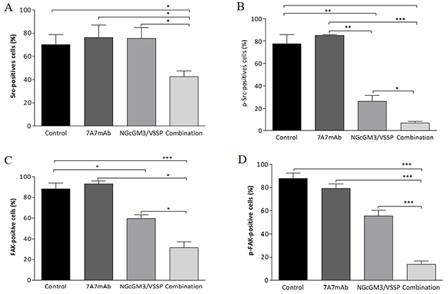 Combinatorial-targeted therapy to EGFR (7A7 mAb) and anti-NGcGM3 (NGcGM3/VSSP vaccine) simultaneously inhibits Src and FAK signaling pathways on remaining 3LL-metastases.