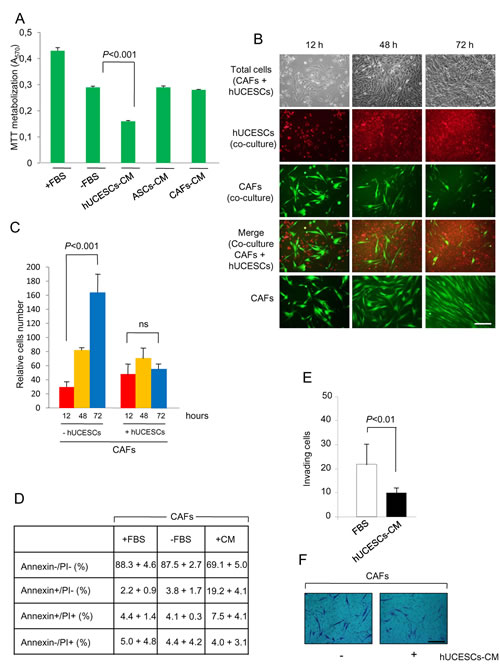 Proliferation, apoptosis and invasion of CAFs was modified after hUCESCs-CM treatment.