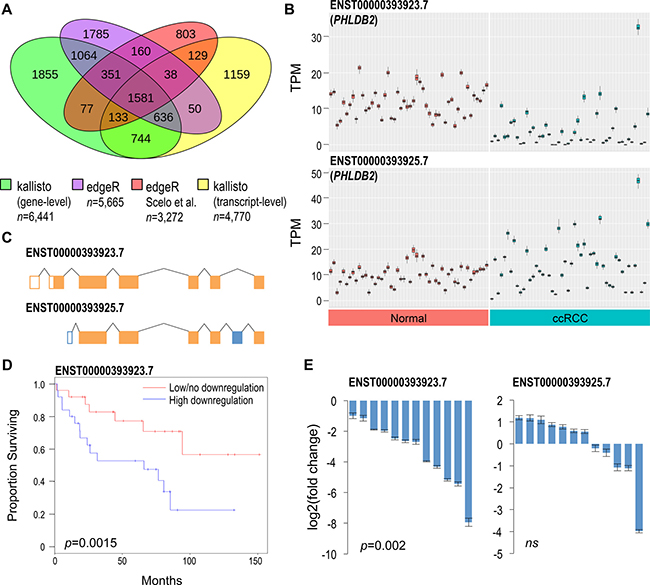 Comparative differential expression analysis identifies novel genes implicated in ccRCC.