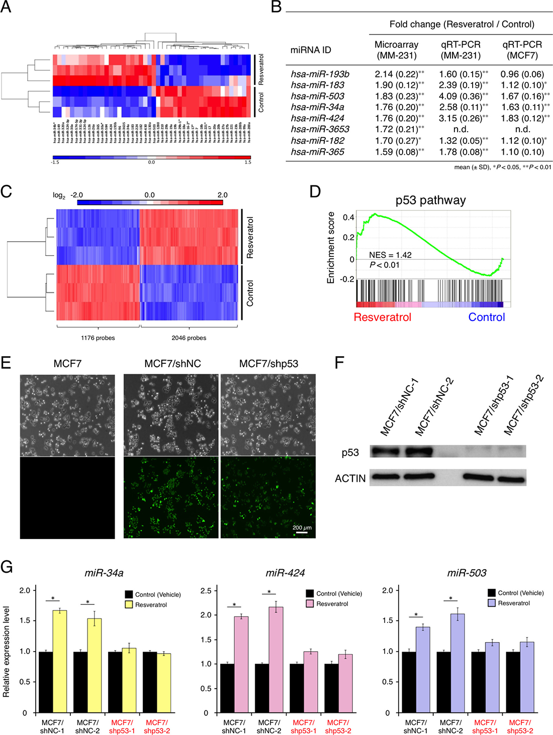 Effects of resveratrol on miRNA and mRNA profiles and resveratrol-regulated miRNAs in breast cancer.