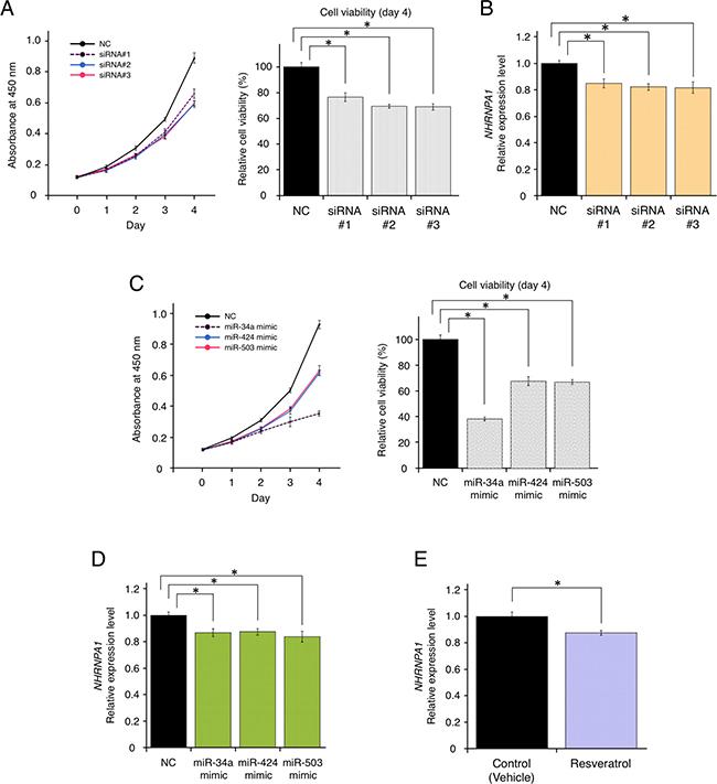 Resveratrol-mediated down-regulation of HNRNPA1 expression inhibited cancer cell proliferation.